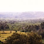 Paddy Fields from Deck