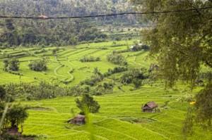 Bali Asli Countryside
