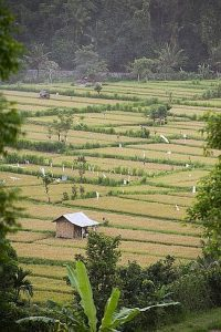 View from Bali Asli