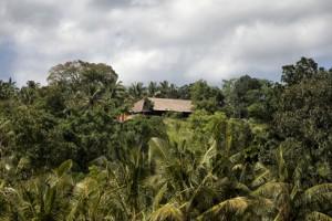 Bali Asli nestled in the trees